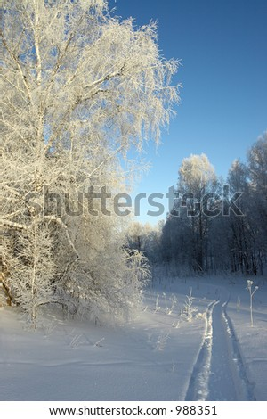 Forest in the winter - stock photo