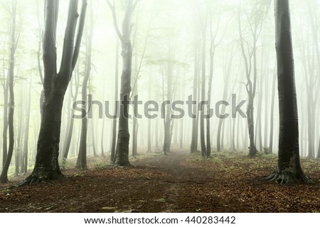 Forest into the fog - stock photo