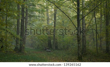 Forest just after rain with hornbeam tree in foreground - stock photo