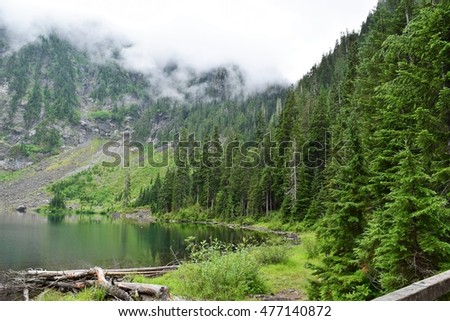 Forest lake mountain