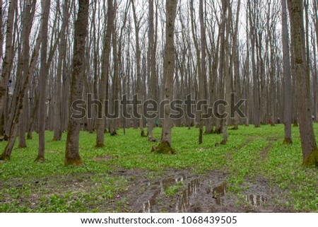 Forest landscape after rain woth mud and water