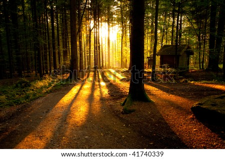 Forest landscape at the end of autumn. The magic light of the setting sun through the trees. - stock photo