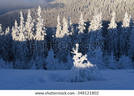Forest landscape. Christmas tree in snow. Beautiful winter. Carpathians, Ukraine, Europe - stock photo