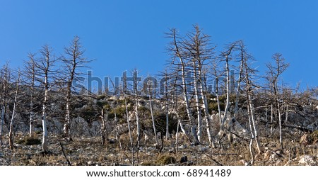 Forest landscape long after forest fire