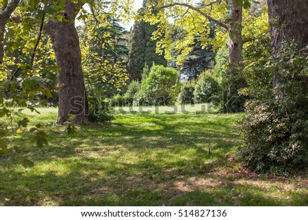 Forest landscape. Nice c�orner of the park with plane trees