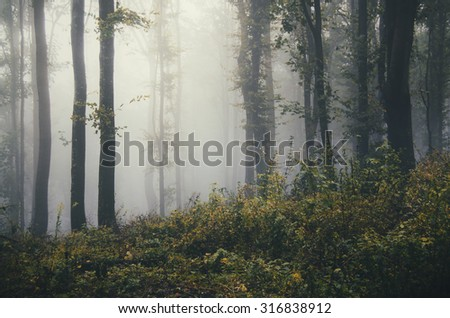 forest landscape with fog - stock photo