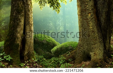 Forest landscape with old massive trees and mossy stones - stock photo