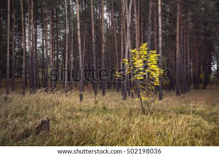 forest landscape with single yellow tree