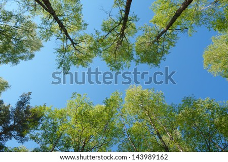 forest - low angle shot in summer - stock photo