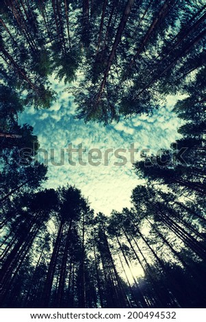 forest - low angle shot in summer, fish eye lens, in the shape of heart - stock photo