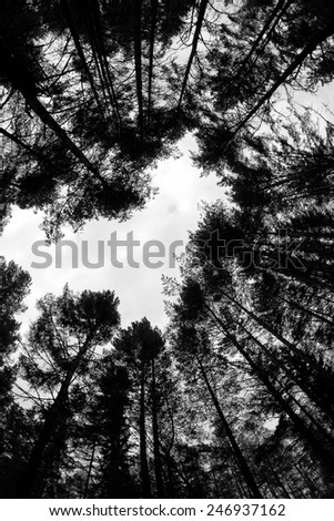 forest - low angle shot in summer, fish eye lens, in the shape of heart, black and white - stock photo