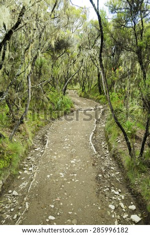 Forest lowlands on Mount Kilimanjaro in Tanzania, Africa. - stock photo