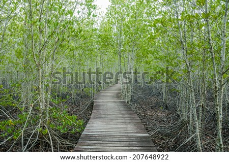 forest mangrove