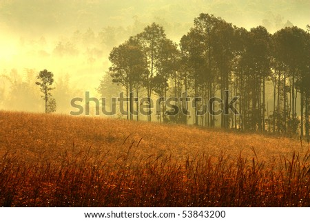 Forest mist at morning - stock photo