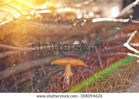 Forest mushroom. Art photo with shallow depth of field and bokeh - stock photo