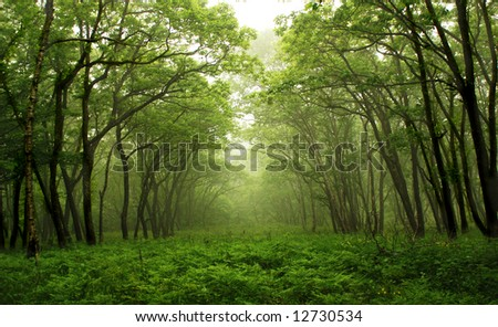 Forest mystic way, Primorye, Russia - stock photo