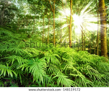 Forest nature background. Fern in jungle. Rainforest photography  - stock photo