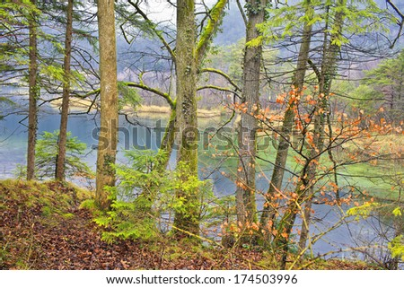 forest near lake - stock photo