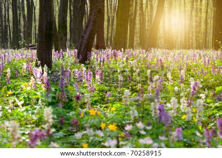 Forest of brightly coloured flowers - stock photo