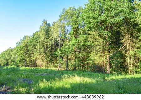 Forest of Eastern Europe on a blue sky background