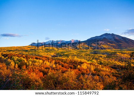 Forest of fall color tree at sunset from Kepler pass, Colorado - stock photo