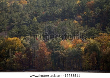 Forest of fall colors