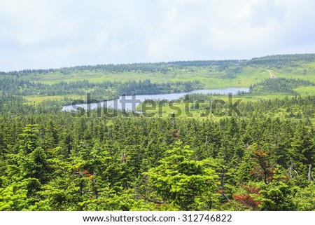 Forest of Mt. Hachimantai, Iwate prefecture, Japan - stock photo