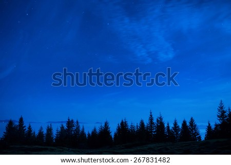Forest of pine trees under blue dark night sky with many stars. Space background - stock photo