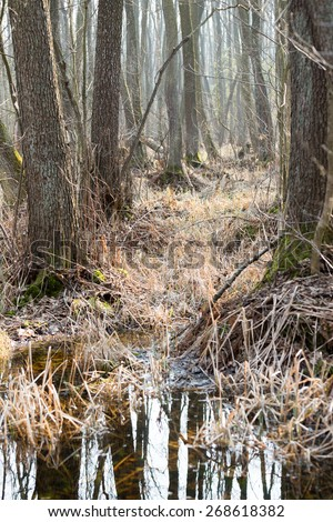 Forest on a boggy ground in Poland - stock photo