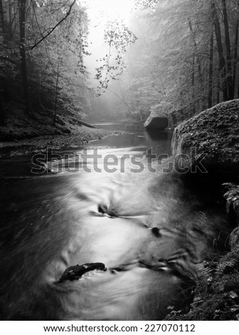Forest on bank of autumn mountain river covered by beech leaves. Bended  branches above water. Black and white photo. - stock photo