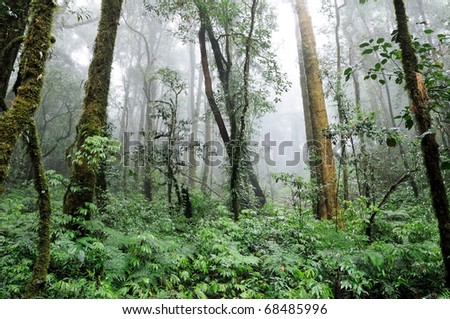 Forest on the highest mountain in Thailand