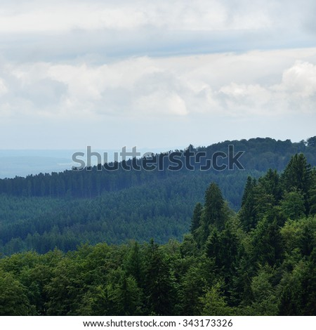 Forest on the hills of Germany - stock photo
