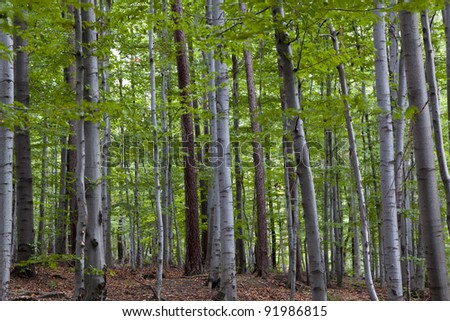 forest on the mountain slope in a nature reserve