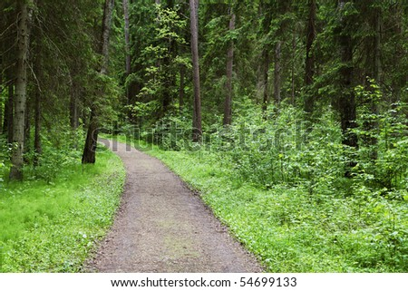 Forest path - stock photo