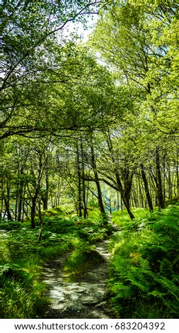 Forest path along the West Highland Way near Loch Lomond, Scotland, showing summer trees.