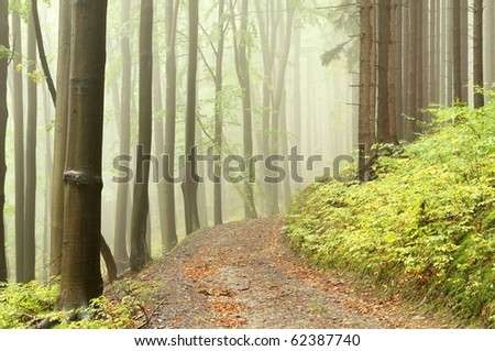 Forest path among the deciduous and coniferous trees on a misty September day. - stock photo