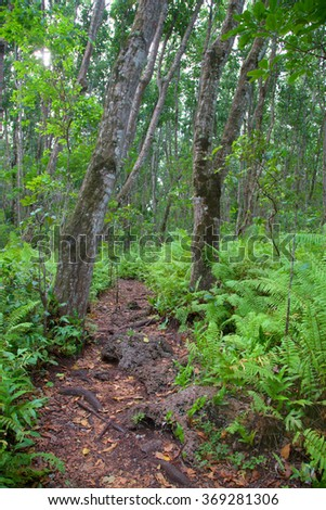 Forest path fern