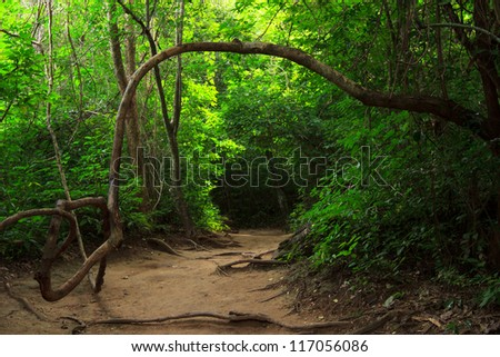 Forest path in Erawan national park, Kanchanaburi - stock photo
