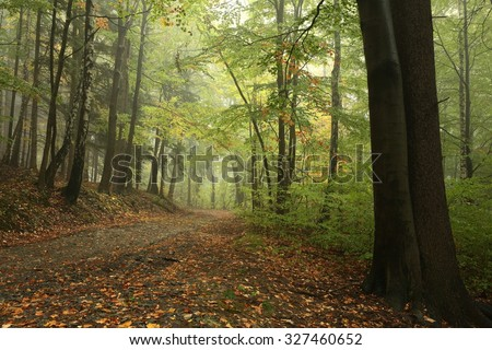 Forest path in misty weather at the beginning of autumn. - stock photo
