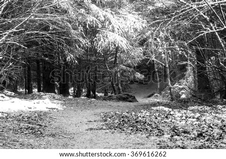 Forest Path in Winter with snow-covered trees.