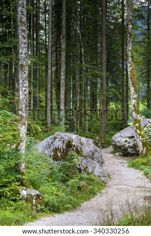 forest path near Hintersee
