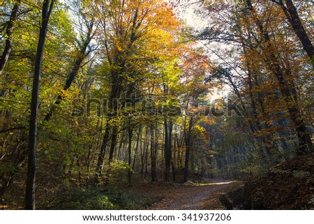 Forest Path Sunbeams through Autumn Forest with Leafs Changing Color - stock photo