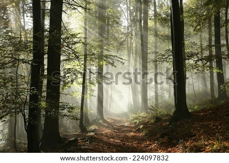 Forest path surrounded by fog in the sunshine. - stock photo