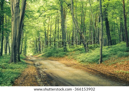 forest path, vintage look - stock photo