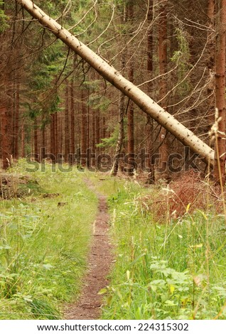 Forest path with fallen tree from an autumn storm