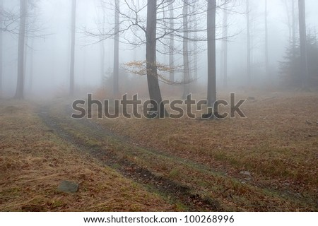 Forest path with fog in the background - stock photo