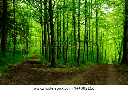Forest path with two options - stock photo