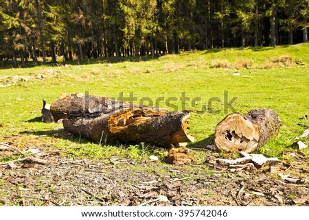 forest,pin tree in forest,pin trees,mountain view,nature,amazing nature in forest ,cut tree down in forest,dry tree in grass,green grass in forest,forest,mountain place,pin trees and blue sky,blue sky - stock photo
