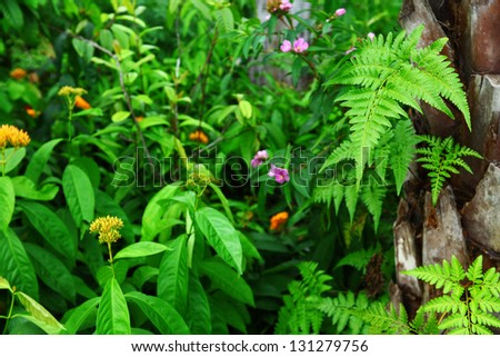 forest plant - stock photo
