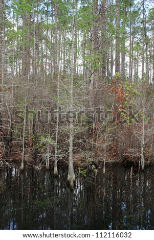 forest pool - stock photo
